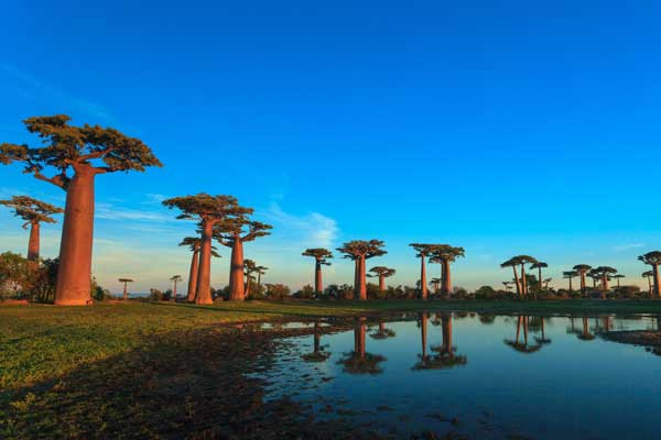 Luxury Travel: Indian Ocean. Madagascar. Image courtesy Shutterstock.