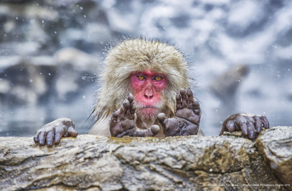 Comedy Wildlife Photo Awards Announces Shortlist