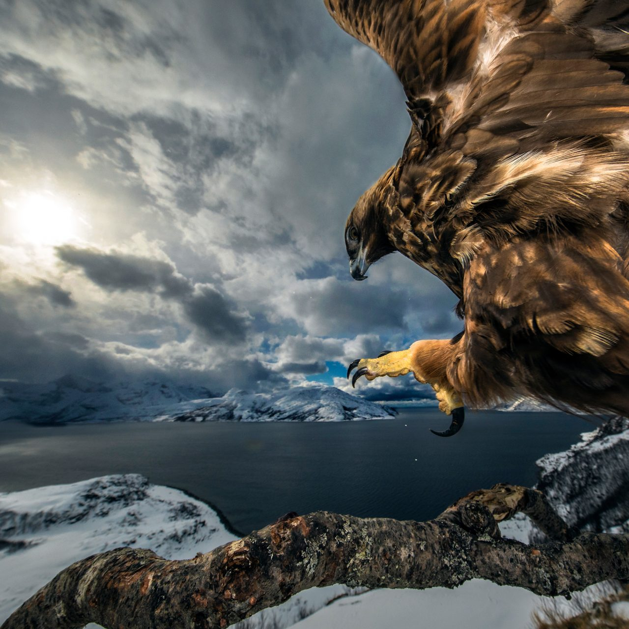 Wildlife Photographer of the Year 2019 Results Announced