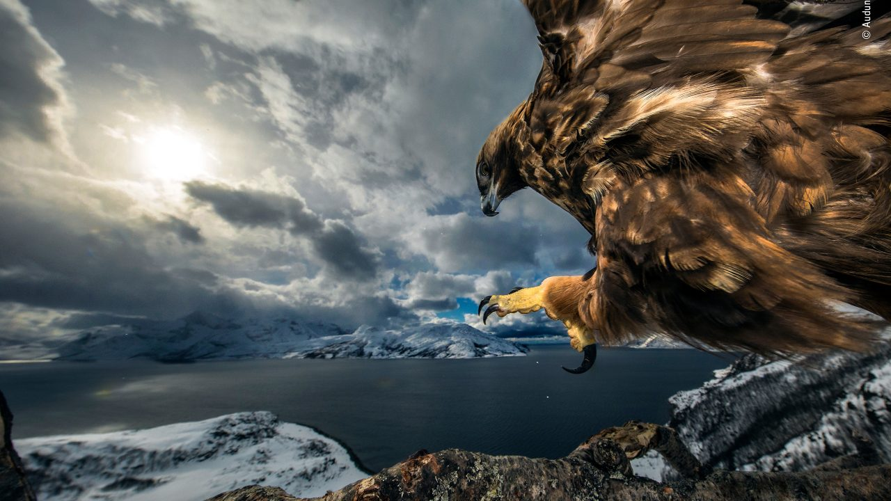 https://www.artsandcollections.com/wp-content/uploads/2019/10/©-Audun-Rikardsen-Wildlife-Photographer-of-the-Year-1280x720.jpg
