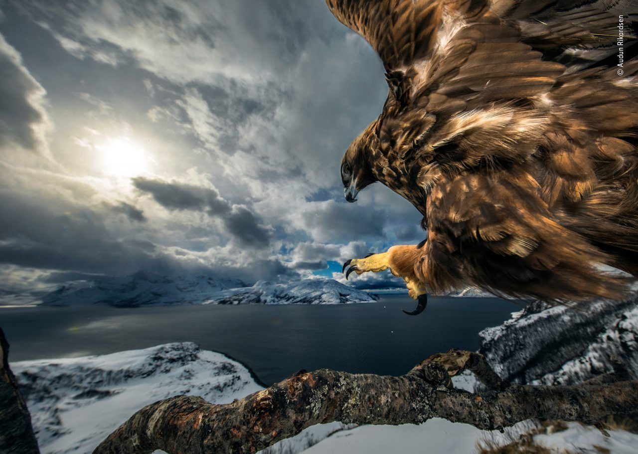 https://www.artsandcollections.com/wp-content/uploads/2019/10/©-Audun-Rikardsen-Wildlife-Photographer-of-the-Year-1280x911.jpg