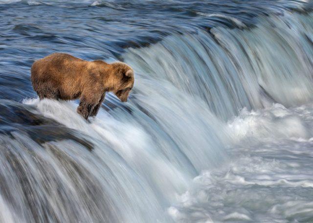 CEWE bear