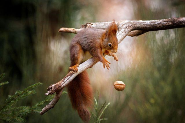 CEWE squirrel