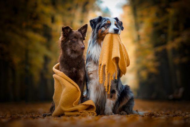 CEWE dogs