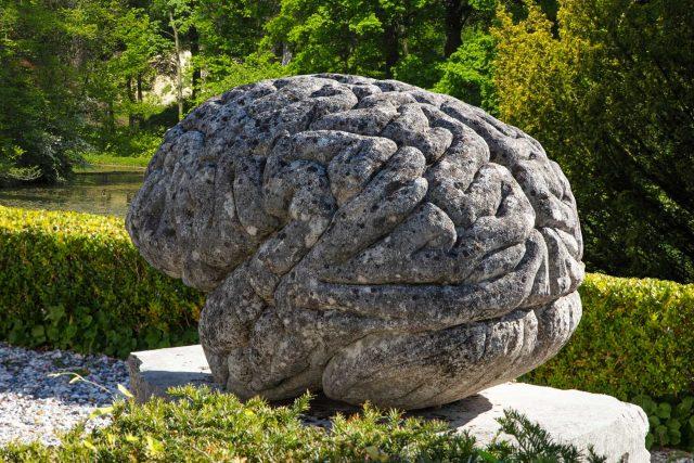 Dreweatts brain