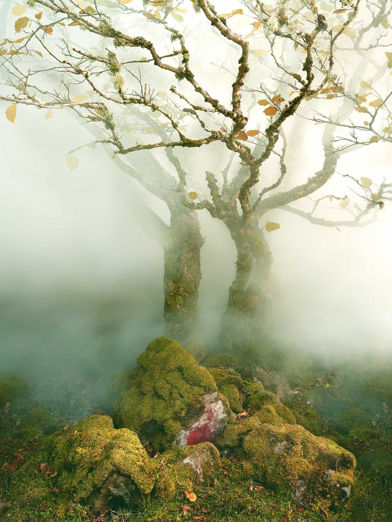 Albert Watson, Tree in Mist, Fairy Glen, Isle of Skye, Scotland, 2013