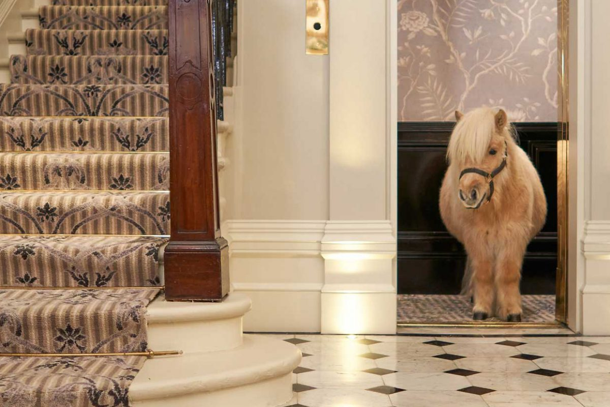The Goring Hotel Gets a Shetland Pony In Residence